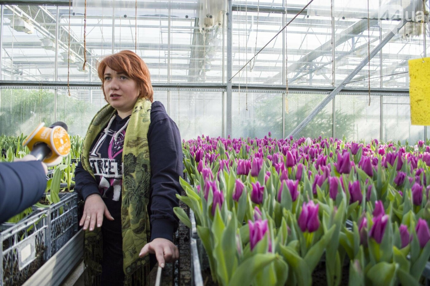 Цветочный рай: в киевской оранжерее зацвели десятки тысяч тюльпанов, фото-3