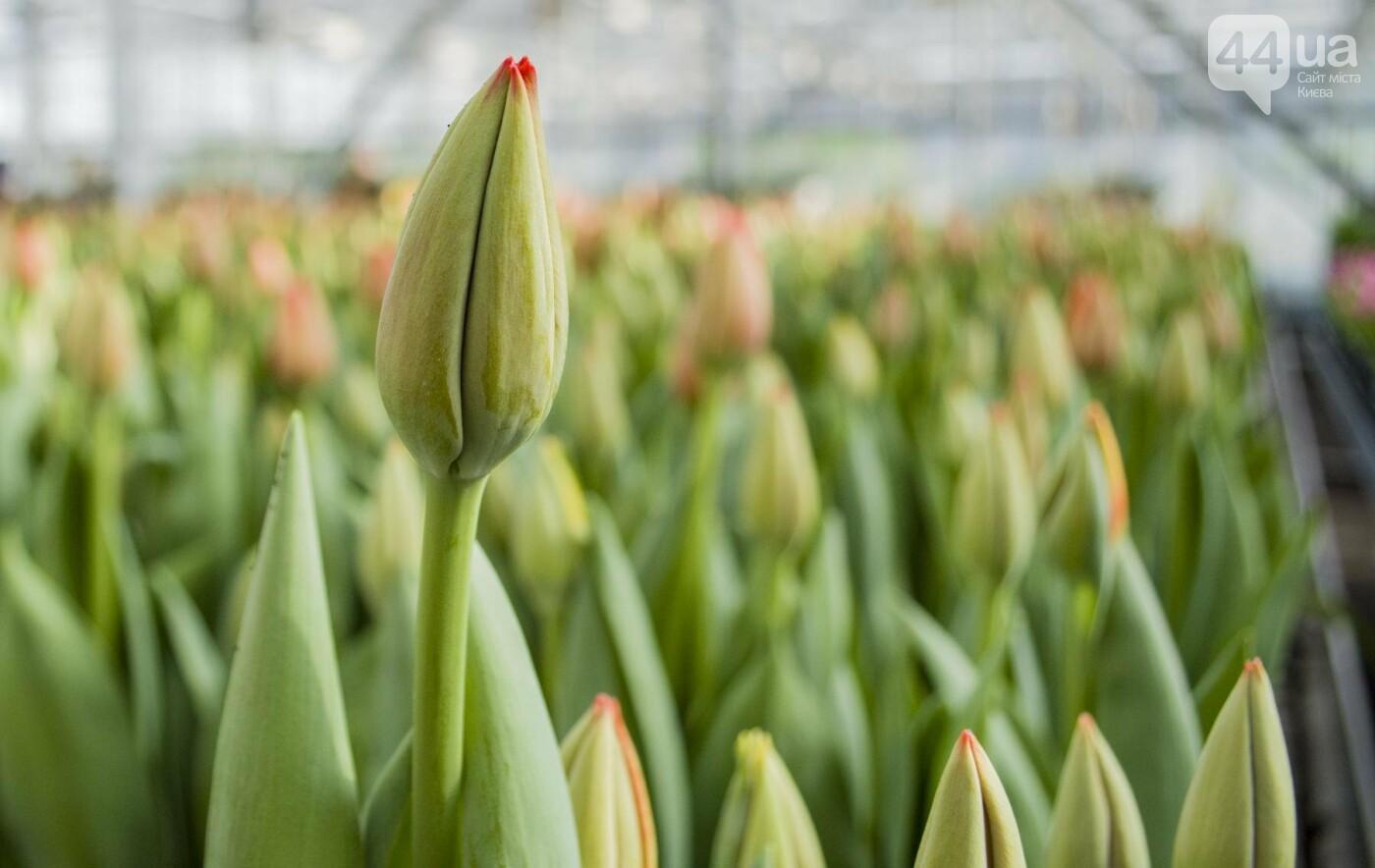 Цветочный рай: в киевской оранжерее зацвели десятки тысяч тюльпанов, фото-12