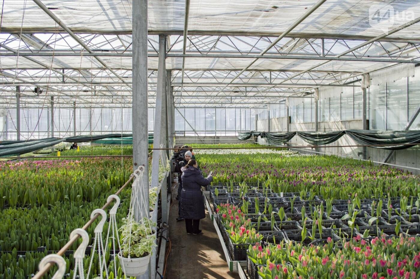 Цветочный рай: в киевской оранжерее зацвели десятки тысяч тюльпанов, фото-1
