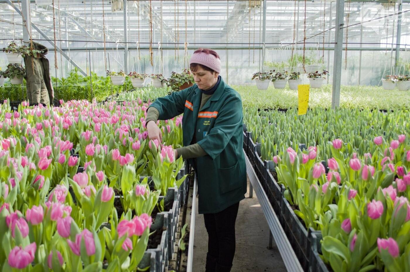 Цветочный рай: в киевской оранжерее зацвели десятки тысяч тюльпанов, фото-5