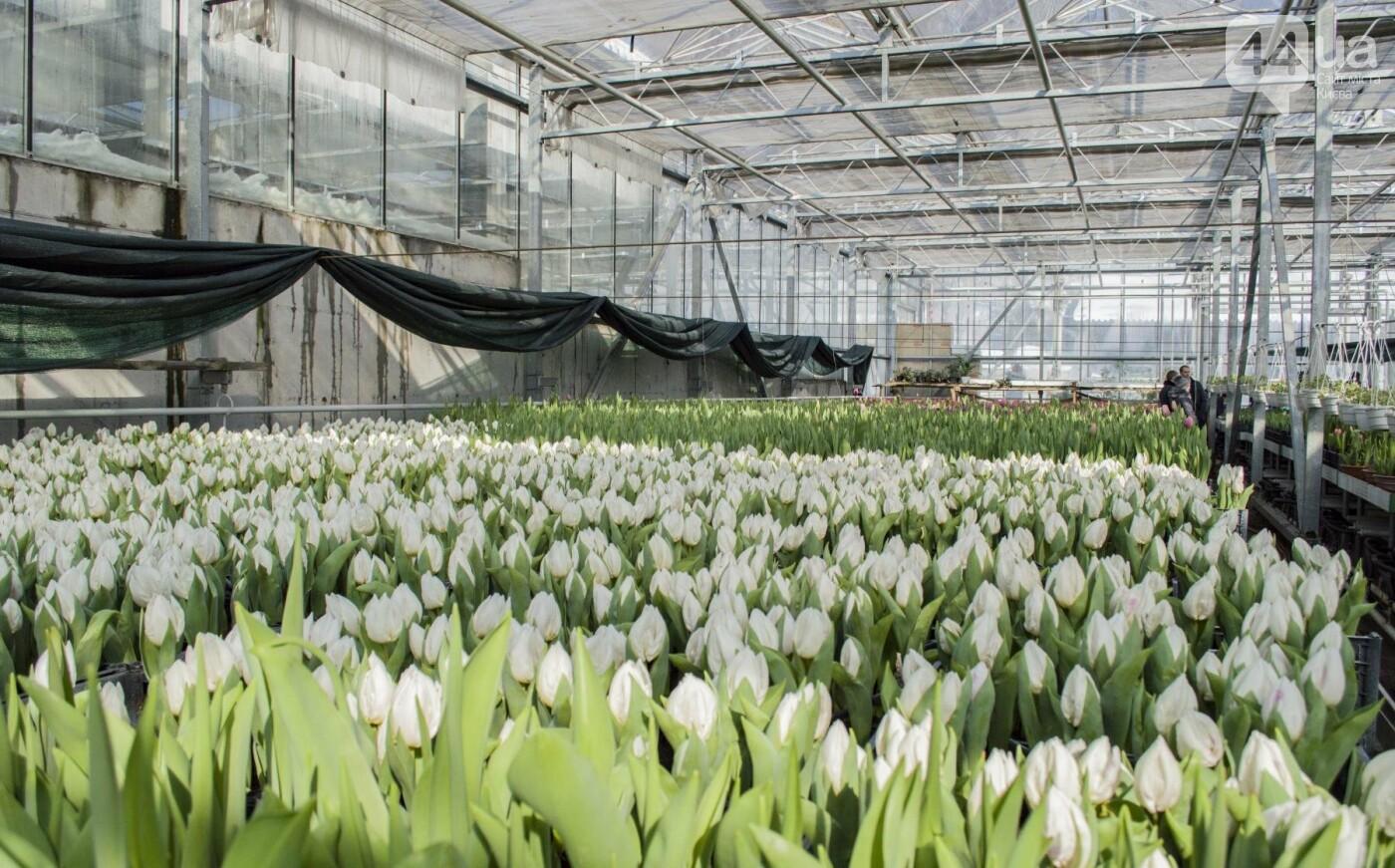 Цветочный рай: в киевской оранжерее зацвели десятки тысяч тюльпанов, фото-10