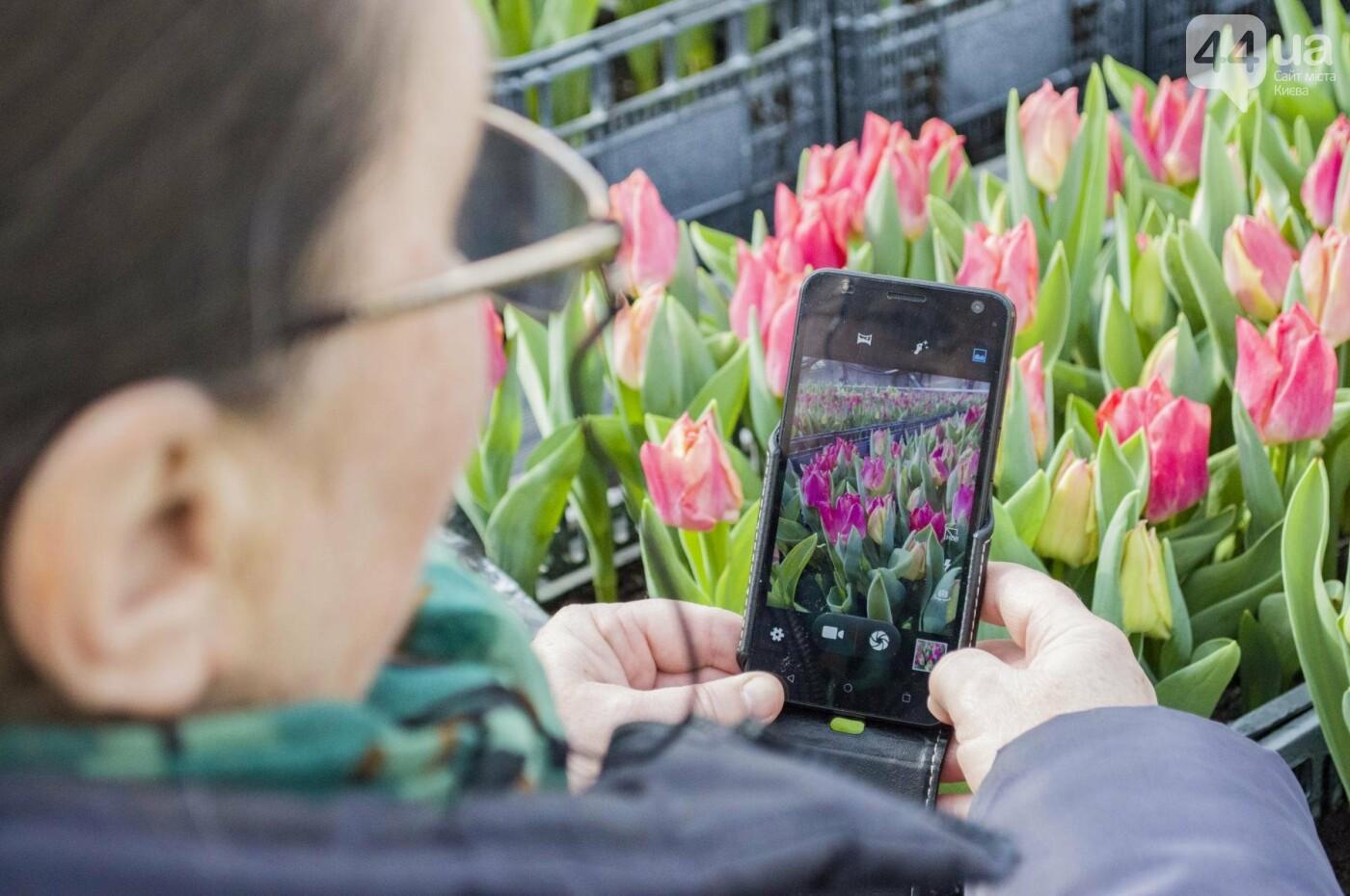 Цветочный рай: в киевской оранжерее зацвели десятки тысяч тюльпанов, фото-9