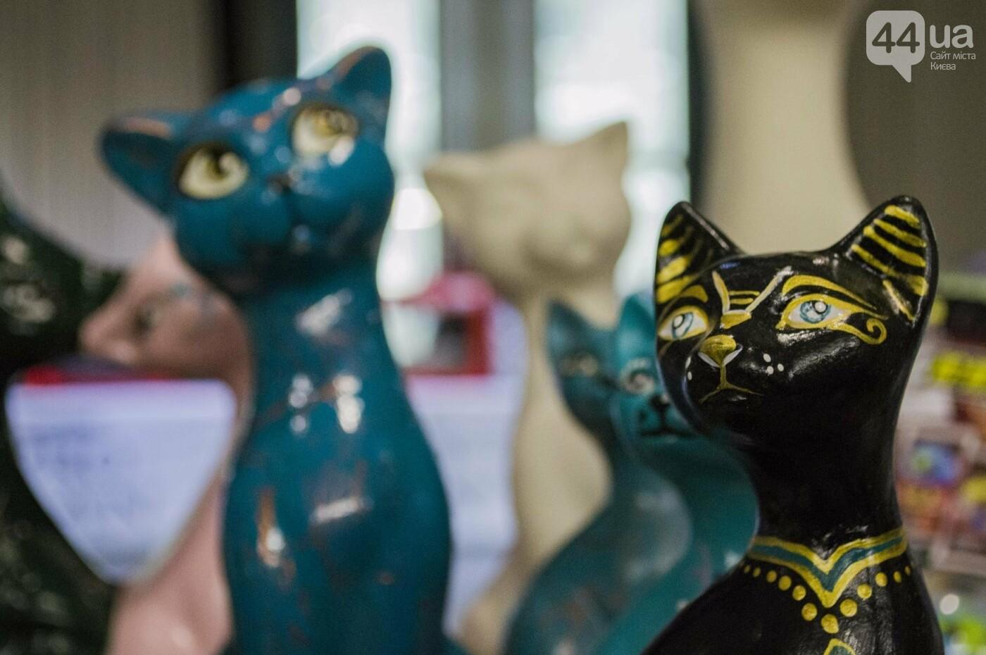 Битва гигантов: в Киеве соревновались коты-великаны, фото-10