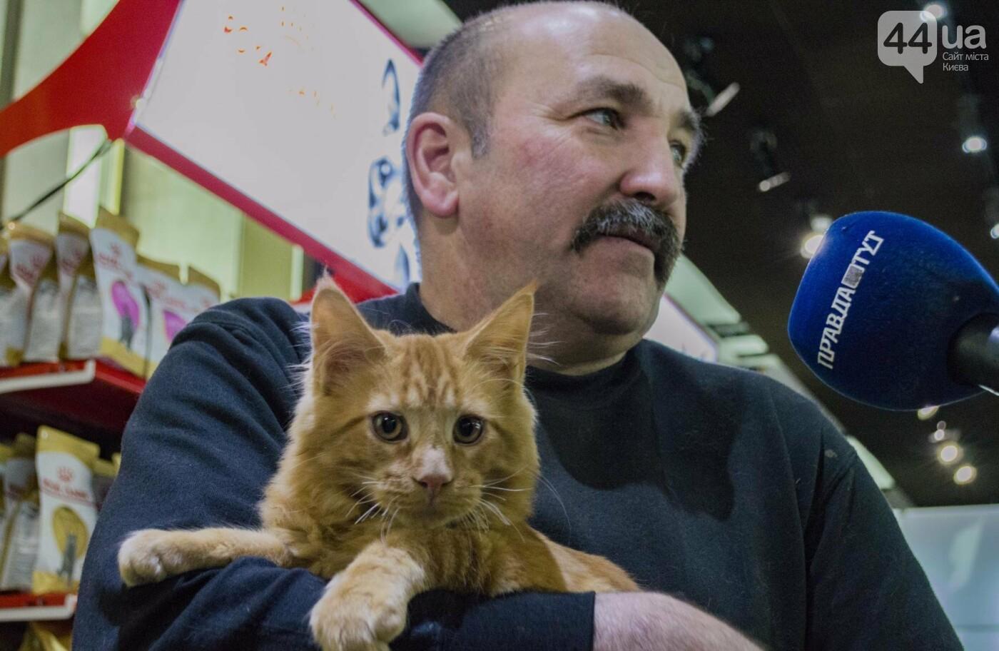 Битва гигантов: в Киеве соревновались коты-великаны, фото-14