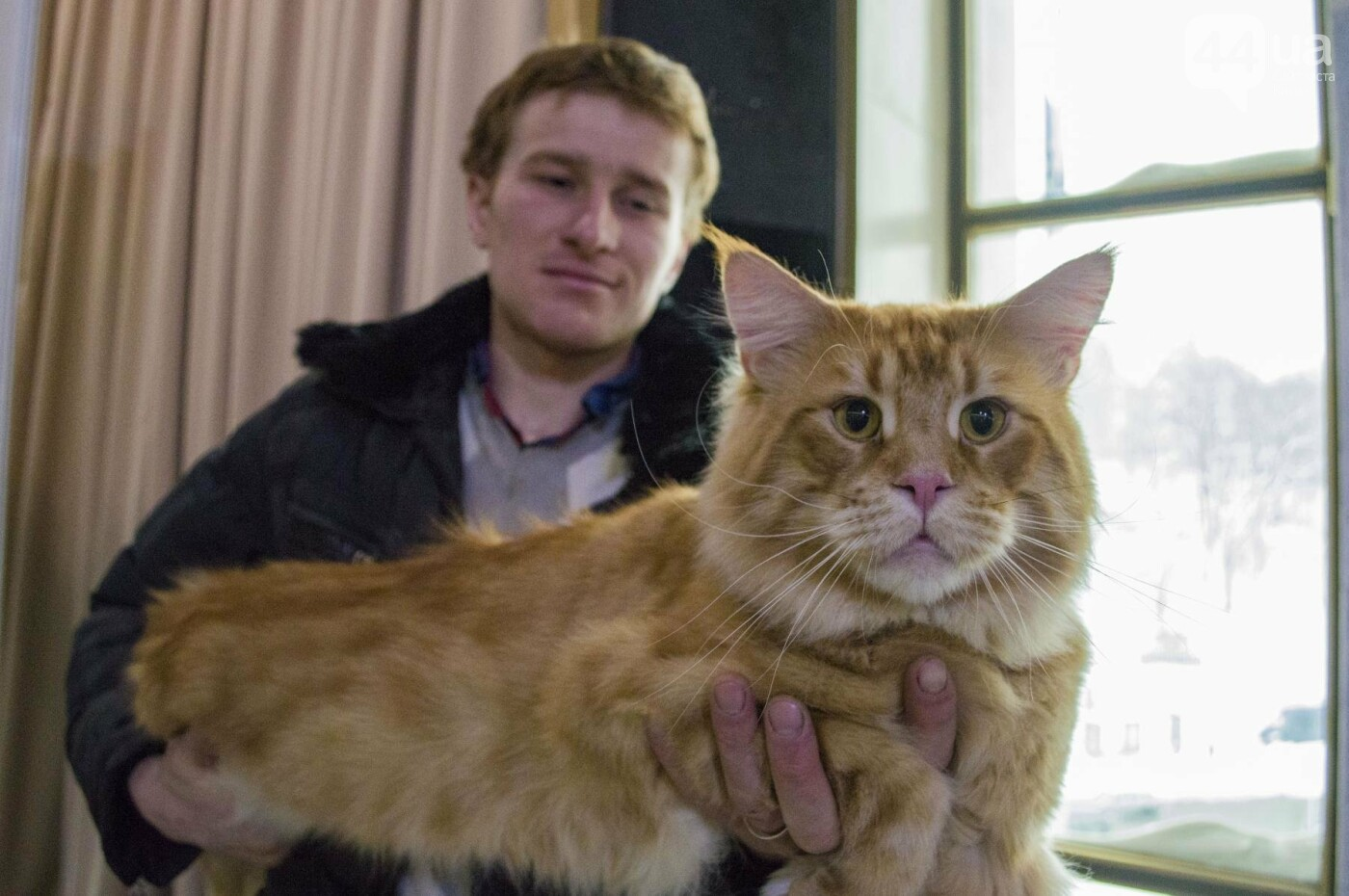 Битва гигантов: в Киеве соревновались коты-великаны, фото-6