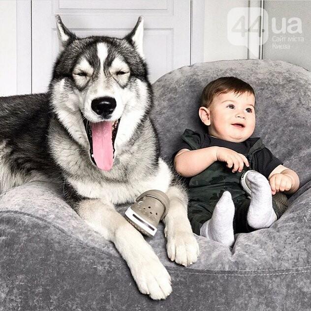 Обзор мебельных компаний Киева: какую мебель выбрать?, фото-65