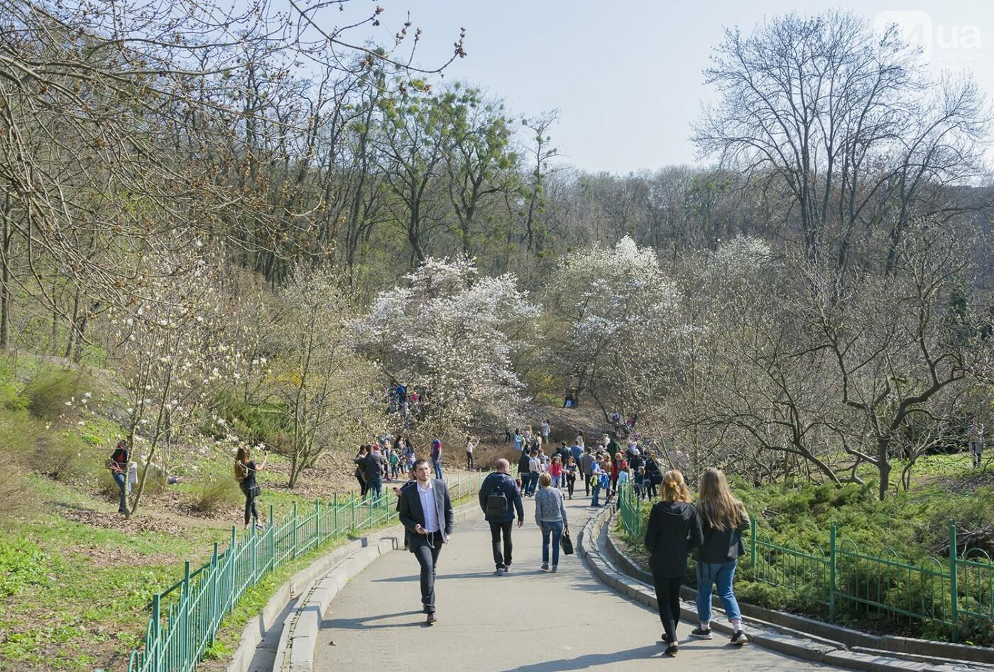 В Киеве расцвели магнолии, фото-13
