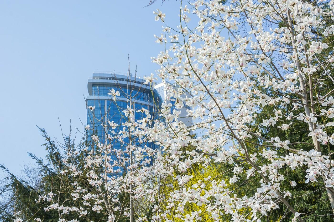 В Киеве расцвели магнолии, фото-22