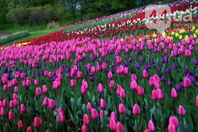 «Вокруг света»: В Киеве открывается ежегодная выставка тюльпанов, фото-1