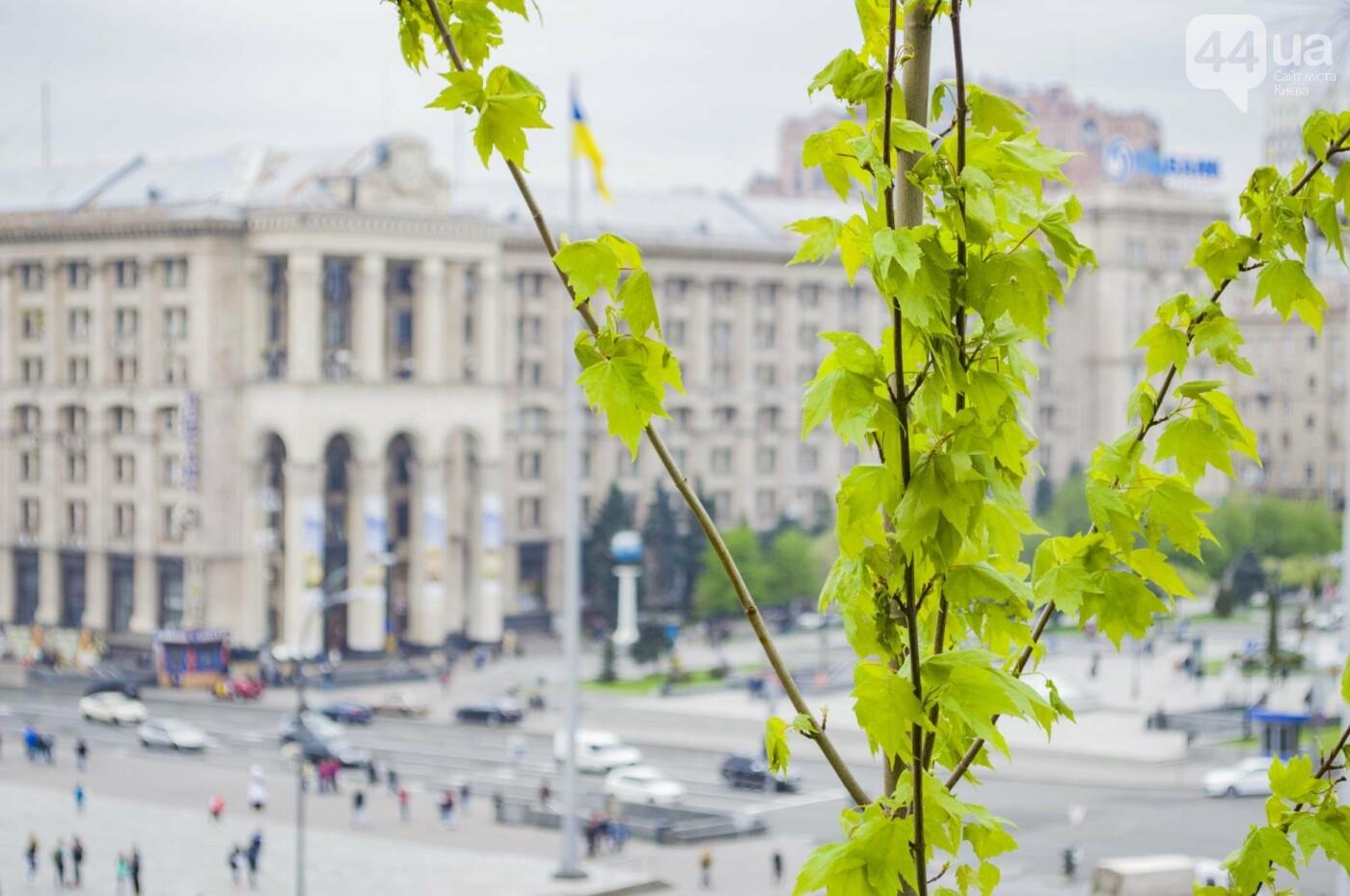 В центре Киева высадили именные деревья в честь украинских бойцов, фото-10