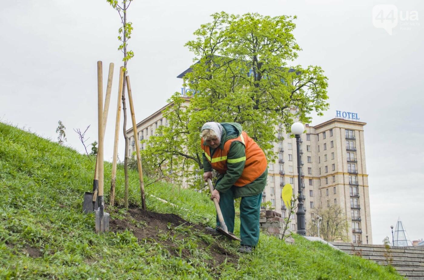 В центре Киева высадили именные деревья в честь украинских бойцов, фото-9