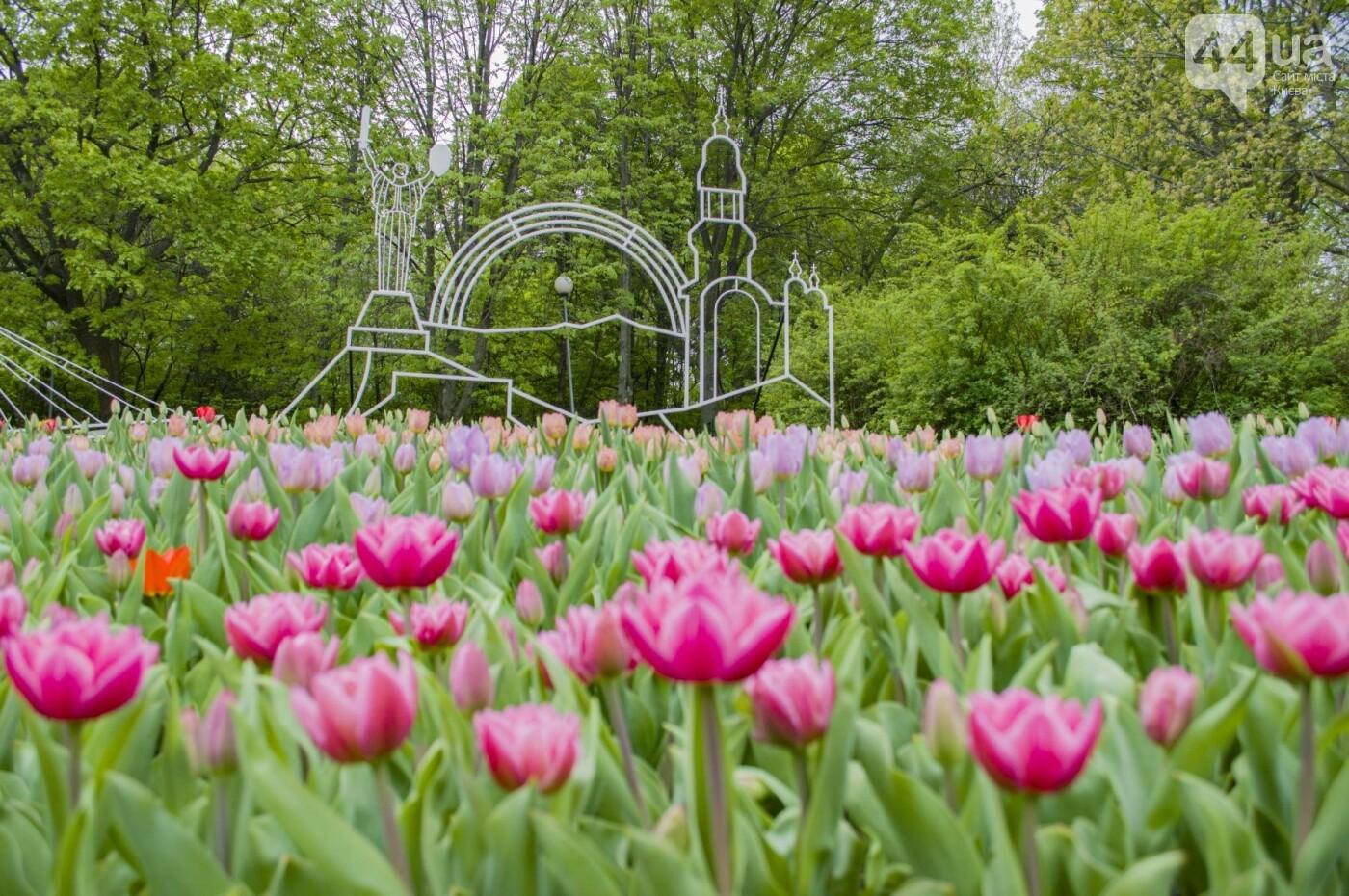 В Киеве открылась масштабная выставка тюльпанов, фото-12
