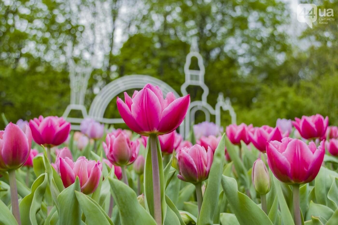 В Киеве открылась масштабная выставка тюльпанов, фото-13