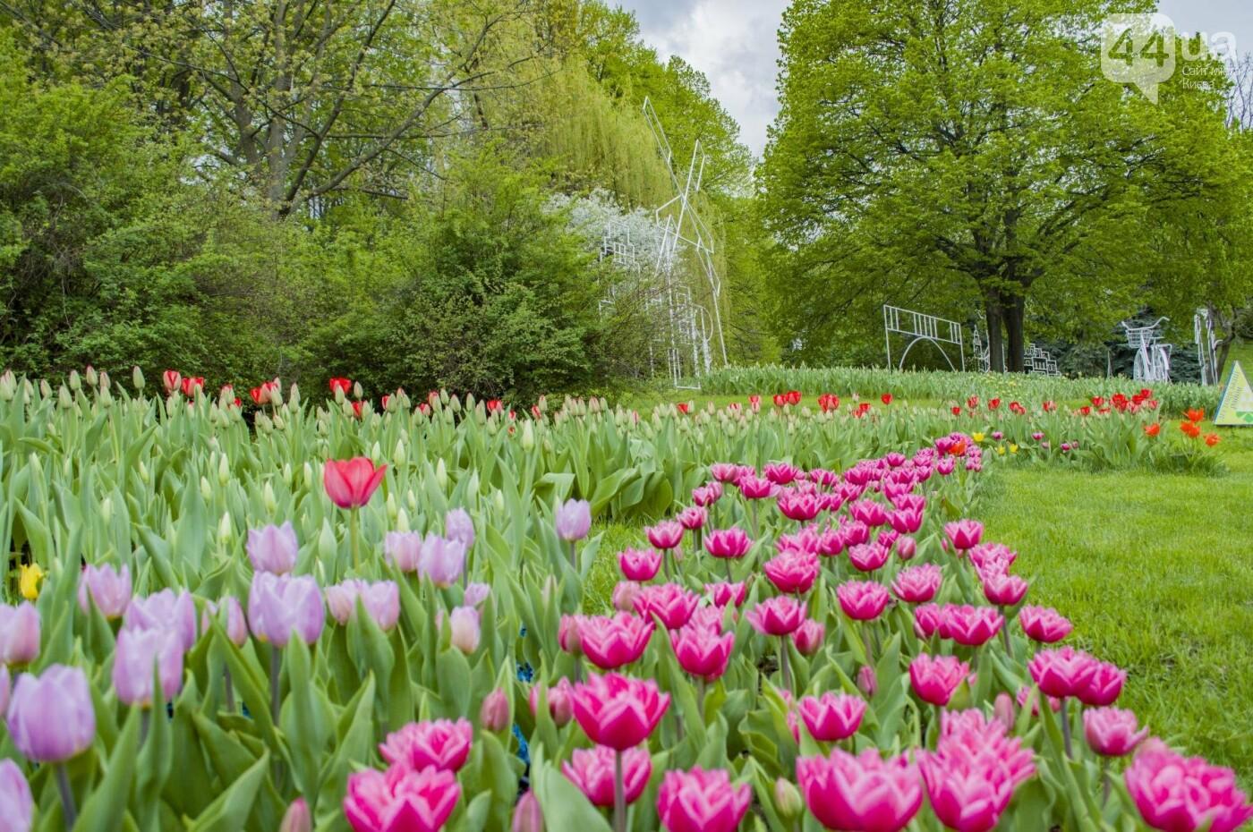 В Киеве открылась масштабная выставка тюльпанов, фото-14
