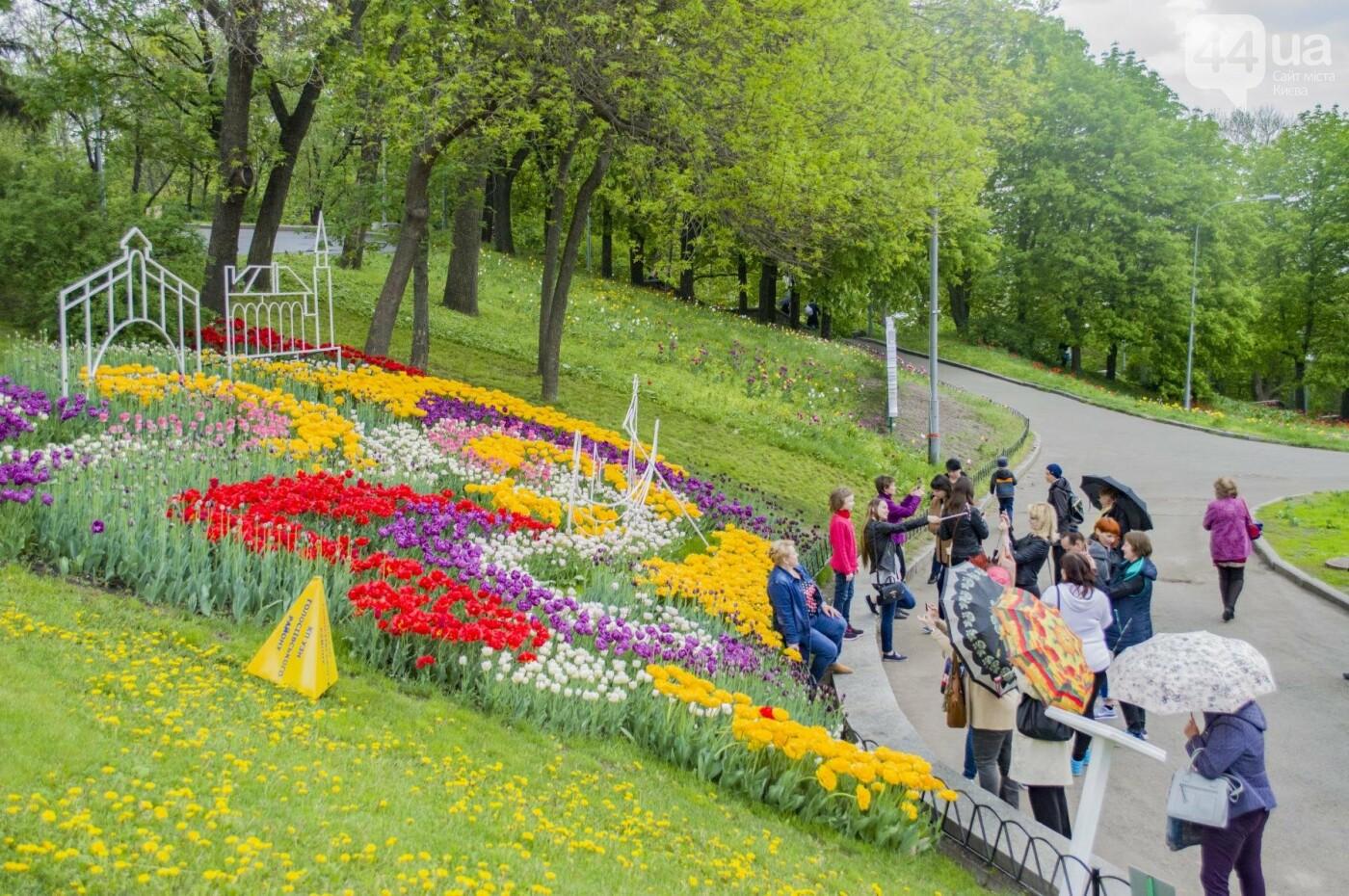 В Киеве открылась масштабная выставка тюльпанов, фото-15
