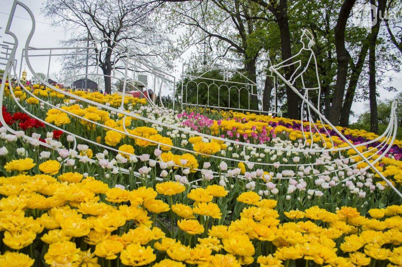 В Киеве открылась масштабная выставка тюльпанов, фото-16
