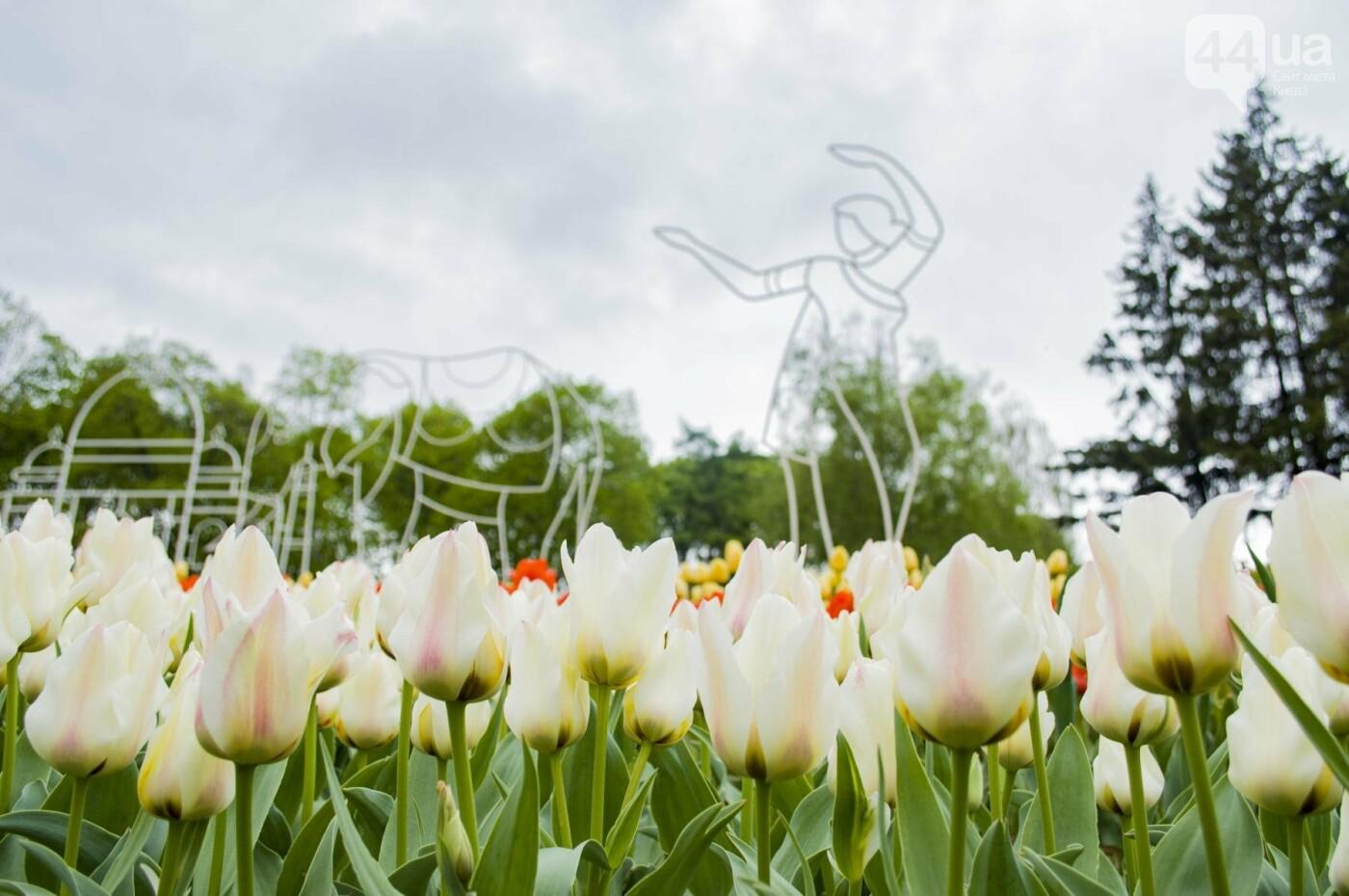 В Киеве открылась масштабная выставка тюльпанов, фото-3