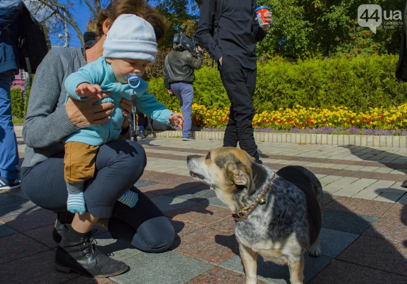 Собаки, коты и хомячки: в Киеве прошла акция за права животных, - ФОТОРЕПОРТАЖ, фото-11