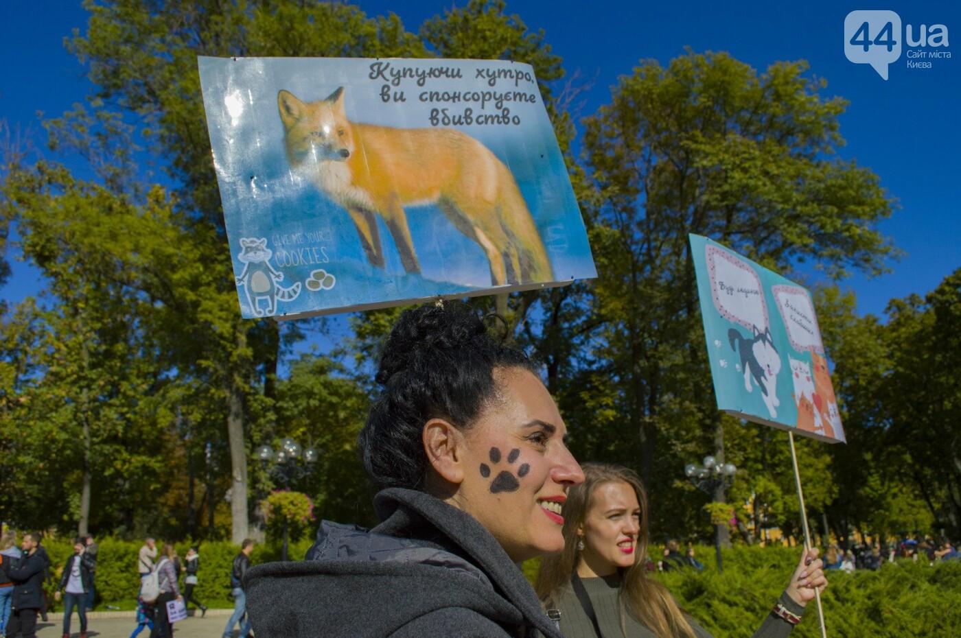 Собаки, коты и хомячки: в Киеве прошла акция за права животных, - ФОТОРЕПОРТАЖ, фото-14