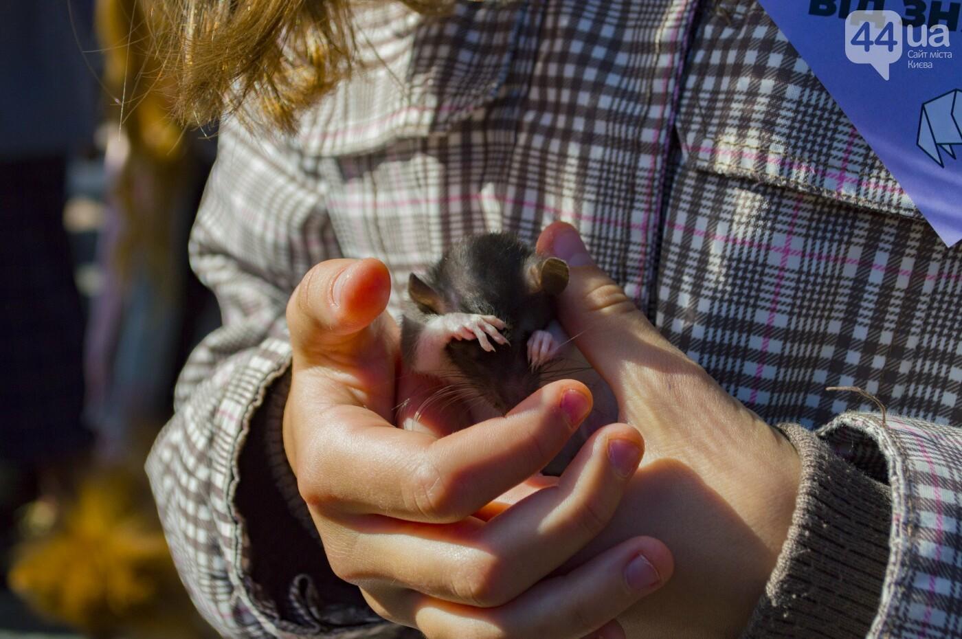 Собаки, коты и хомячки: в Киеве прошла акция за права животных, - ФОТОРЕПОРТАЖ, фото-22