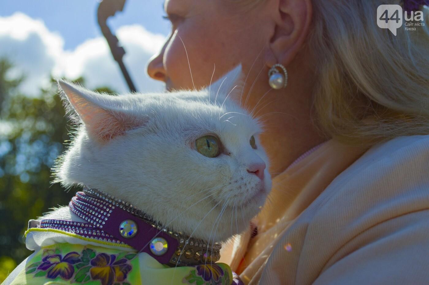 Собаки, коты и хомячки: в Киеве прошла акция за права животных, - ФОТОРЕПОРТАЖ, фото-18