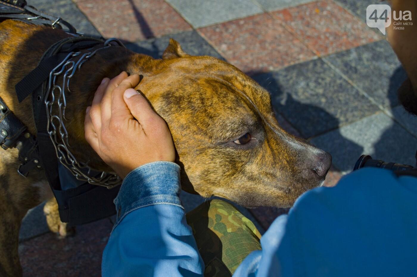 Собаки, коты и хомячки: в Киеве прошла акция за права животных, - ФОТОРЕПОРТАЖ, фото-9