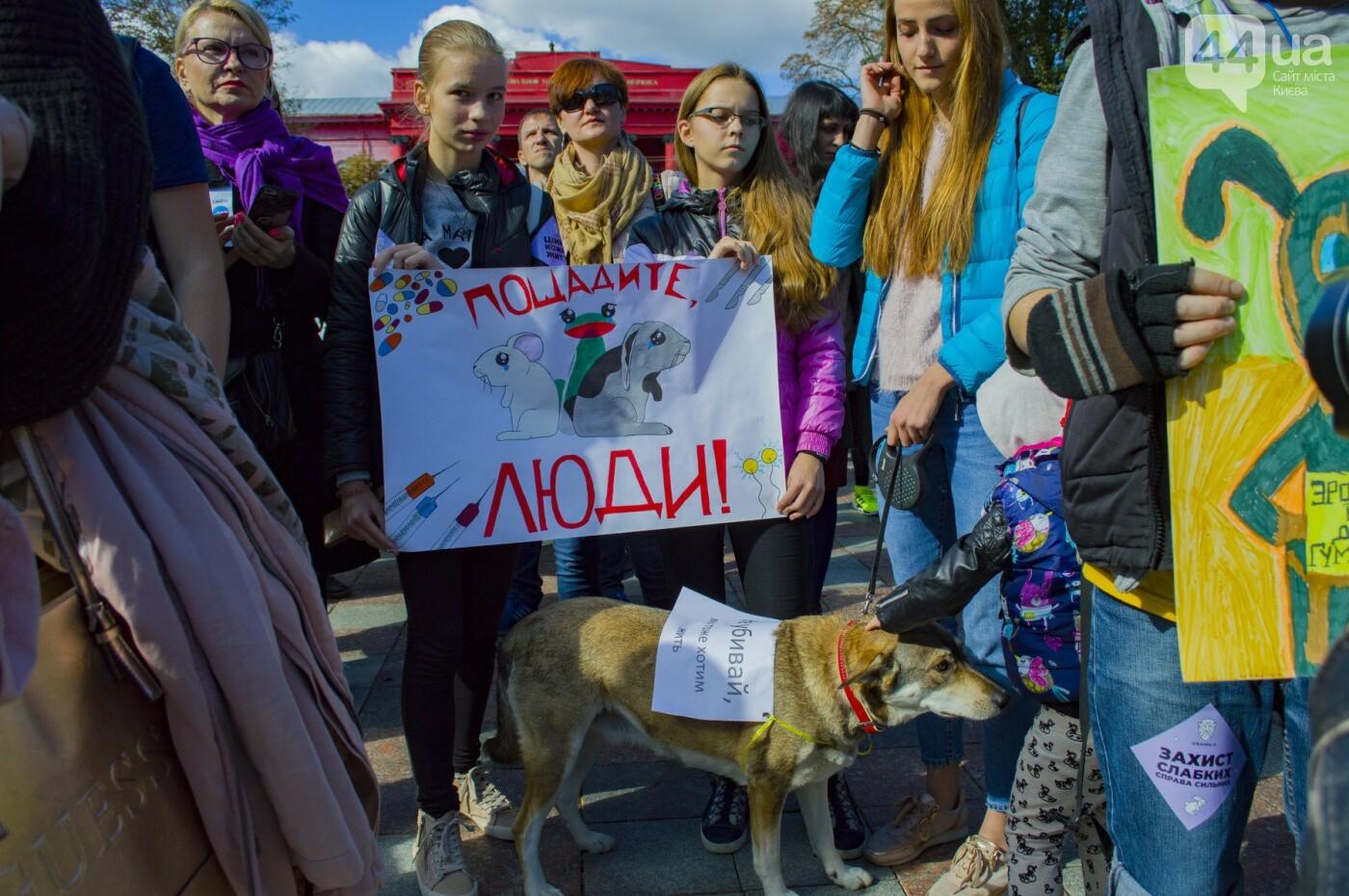 Собаки, коты и хомячки: в Киеве прошла акция за права животных, - ФОТОРЕПОРТАЖ, фото-25