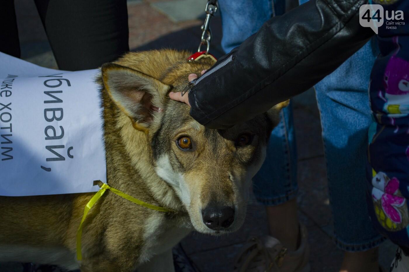 Собаки, коты и хомячки: в Киеве прошла акция за права животных, - ФОТОРЕПОРТАЖ, фото-24