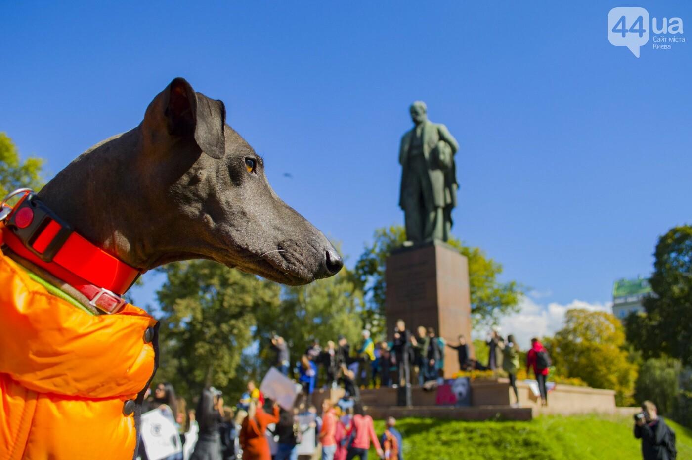 Собаки, коты и хомячки: в Киеве прошла акция за права животных, - ФОТОРЕПОРТАЖ, фото-26