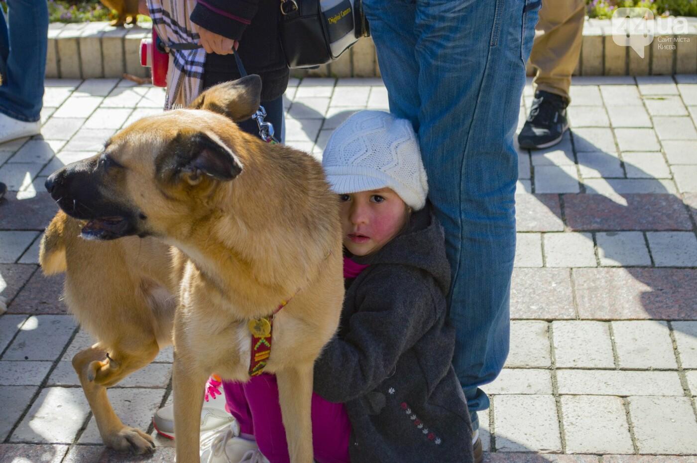 Собаки, коты и хомячки: в Киеве прошла акция за права животных, - ФОТОРЕПОРТАЖ, фото-30