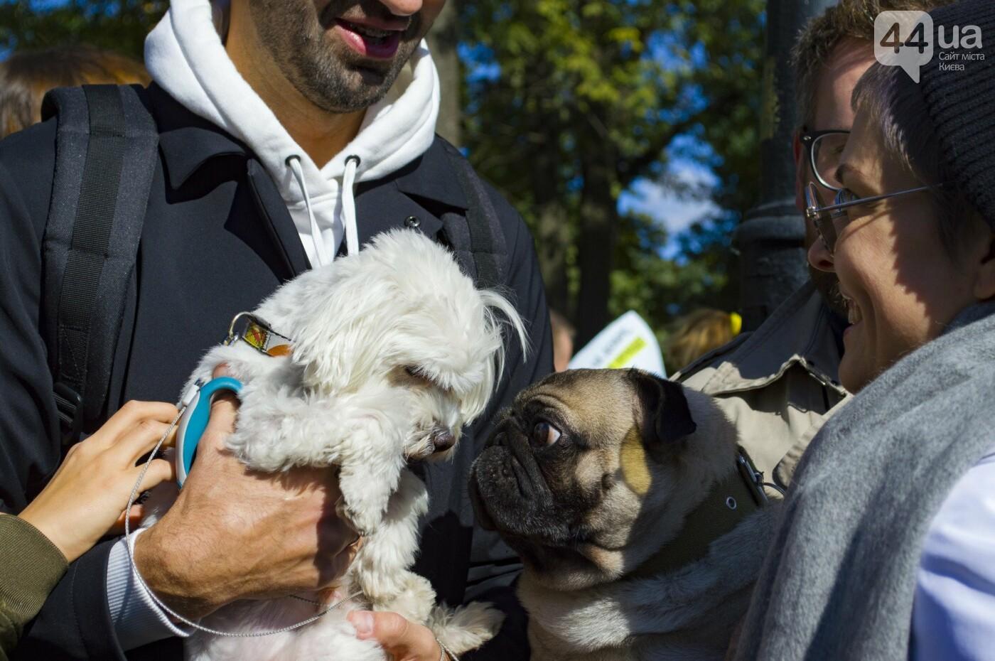 Собаки, коты и хомячки: в Киеве прошла акция за права животных, - ФОТОРЕПОРТАЖ, фото-35