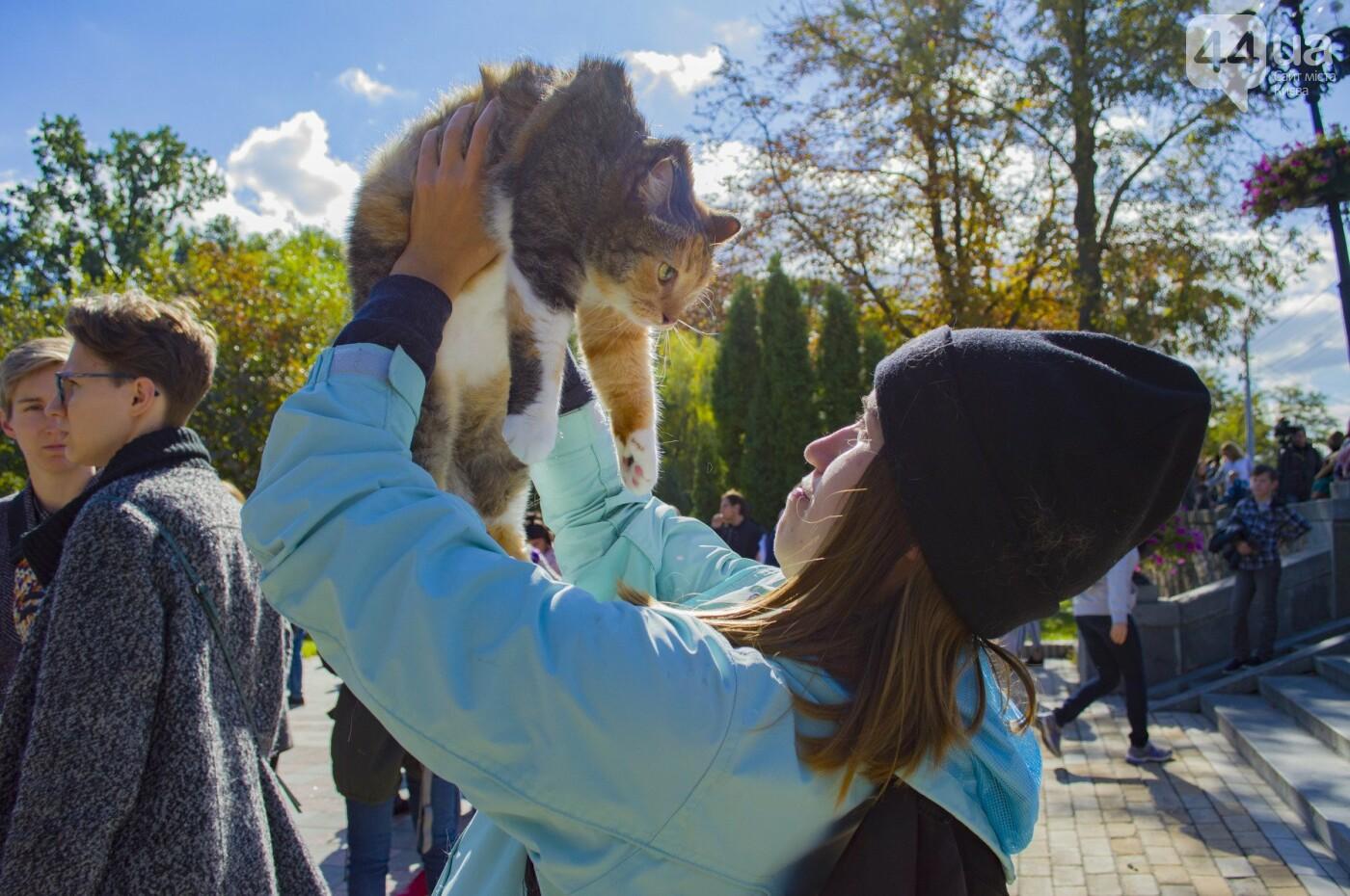 Собаки, коты и хомячки: в Киеве прошла акция за права животных, - ФОТОРЕПОРТАЖ, фото-31