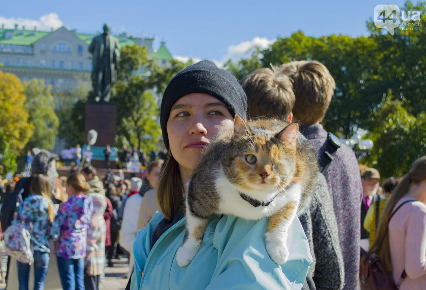 Собаки, коты и хомячки: в Киеве прошла акция за права животных, - ФОТОРЕПОРТАЖ, фото-36