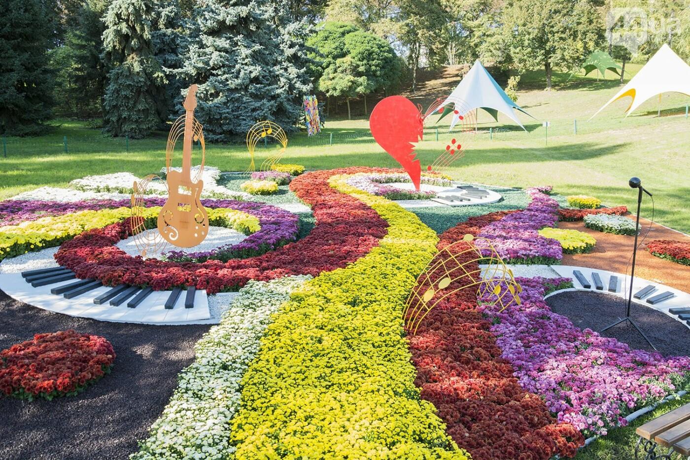 С музыкой и цветами: в Киеве стартовал красочный фестиваль хризантем, - ФОТОРЕПОРТАЖ, фото-9