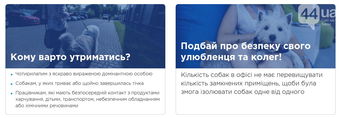 Киевлянам предложили массово прийти на работу со своими собаками, фото-3