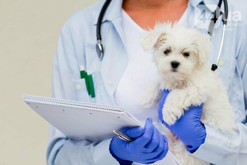 Компания Хорошун – ветеринарное оборудование по выгодной цене, фото-1