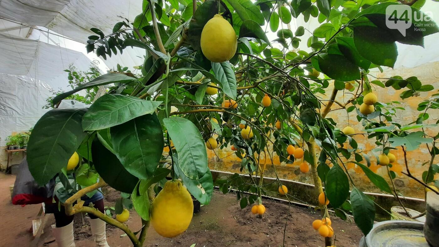 Запахи Chanel и ананасы на деревьях: почему стоит побывать на бананововй ферме под Киевом, фото-11