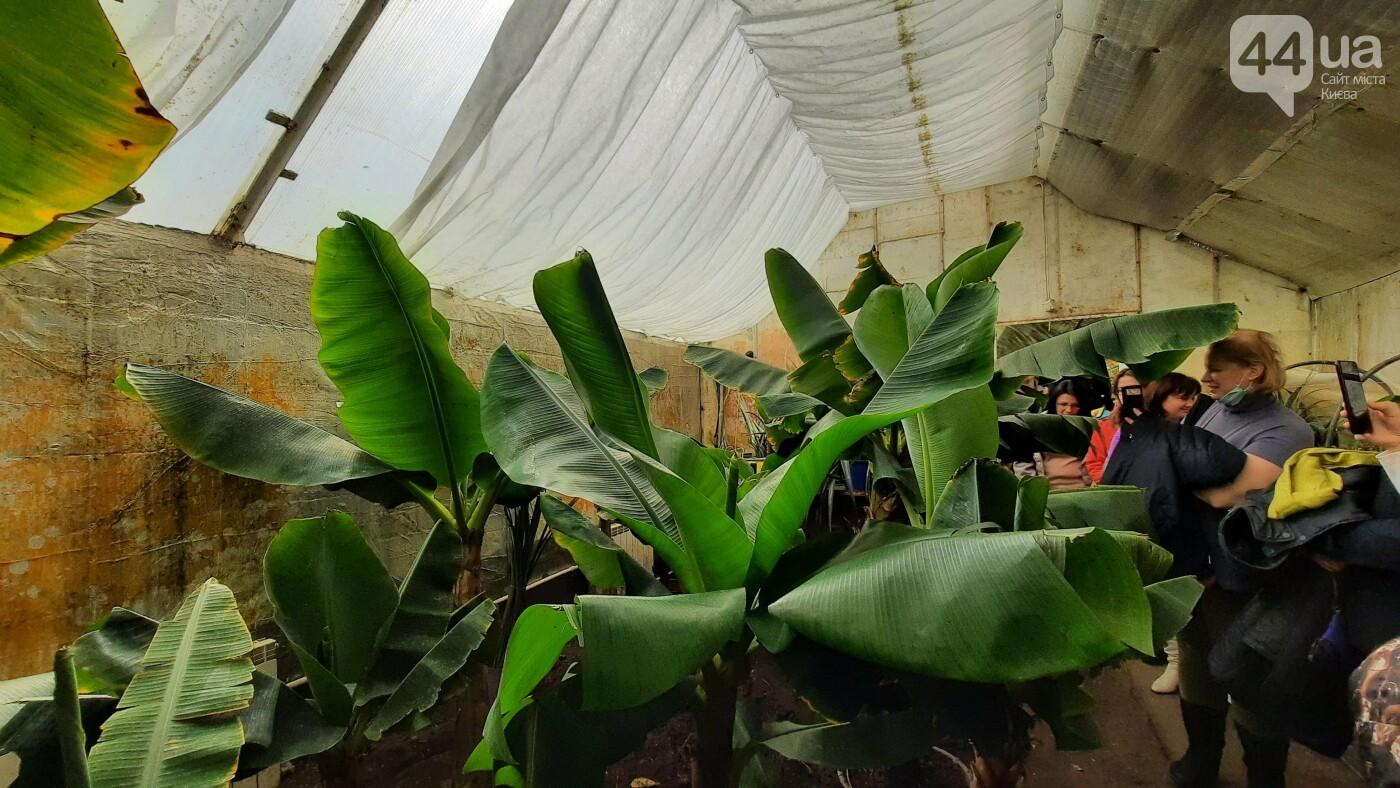 Запахи Chanel и ананасы на деревьях: почему стоит побывать на бананововй ферме под Киевом, фото-8