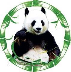Логотип - Панда плюс — курсы иностранных языков