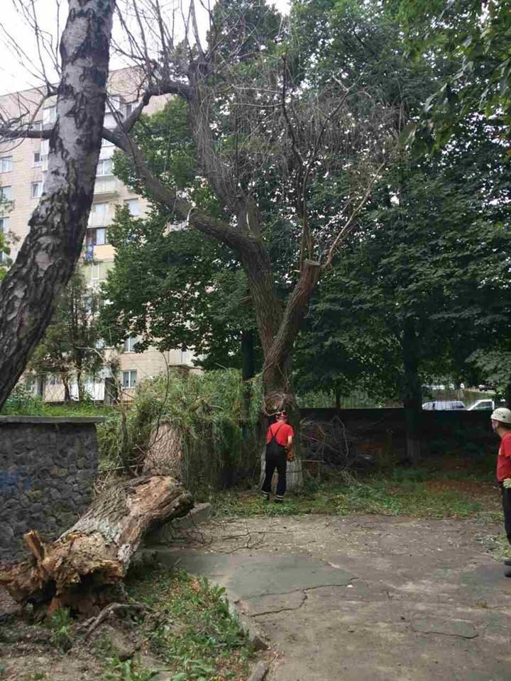 В Киеве дерево рухнуло на автомобиль (ФОТО), фото-1