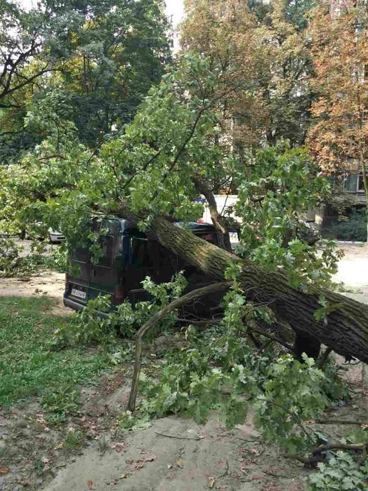 В Киеве дерево рухнуло на автомобиль (ФОТО), фото-2