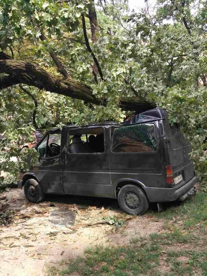 В Киеве дерево рухнуло на автомобиль (ФОТО), фото-3