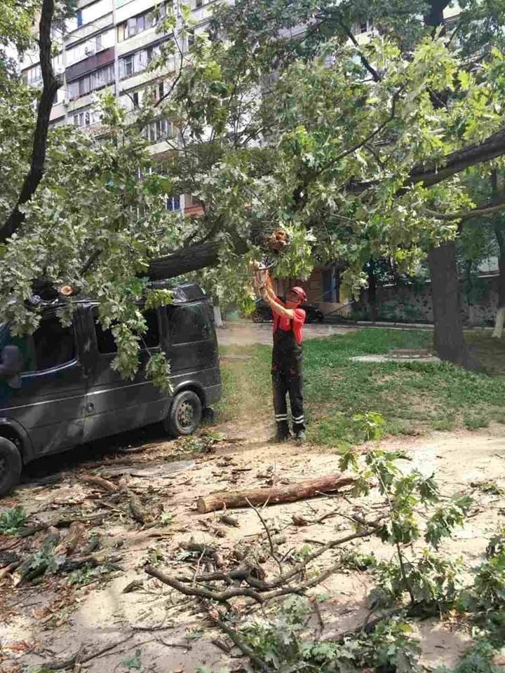 В Киеве дерево рухнуло на автомобиль (ФОТО), фото-4