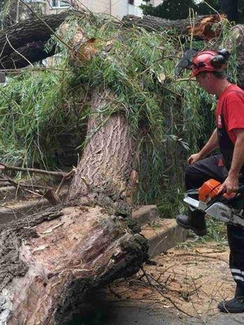 В Киеве дерево рухнуло на автомобиль (ФОТО), фото-5