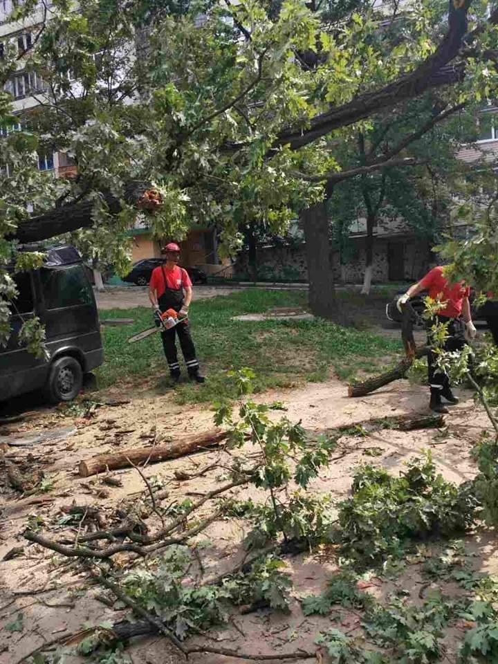 В Киеве дерево рухнуло на автомобиль (ФОТО), фото-6