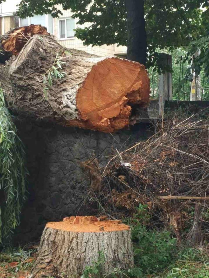 В Киеве дерево рухнуло на автомобиль (ФОТО), фото-7