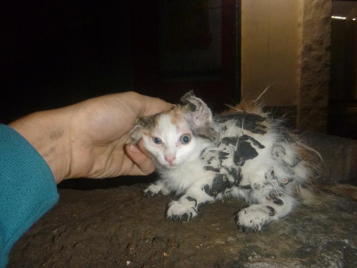 В Киеве спасли приклеенного битумом котенка (ФОТО), фото-4