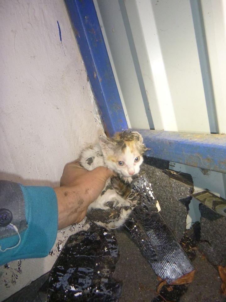 В Киеве спасли приклеенного битумом котенка (ФОТО), фото-2