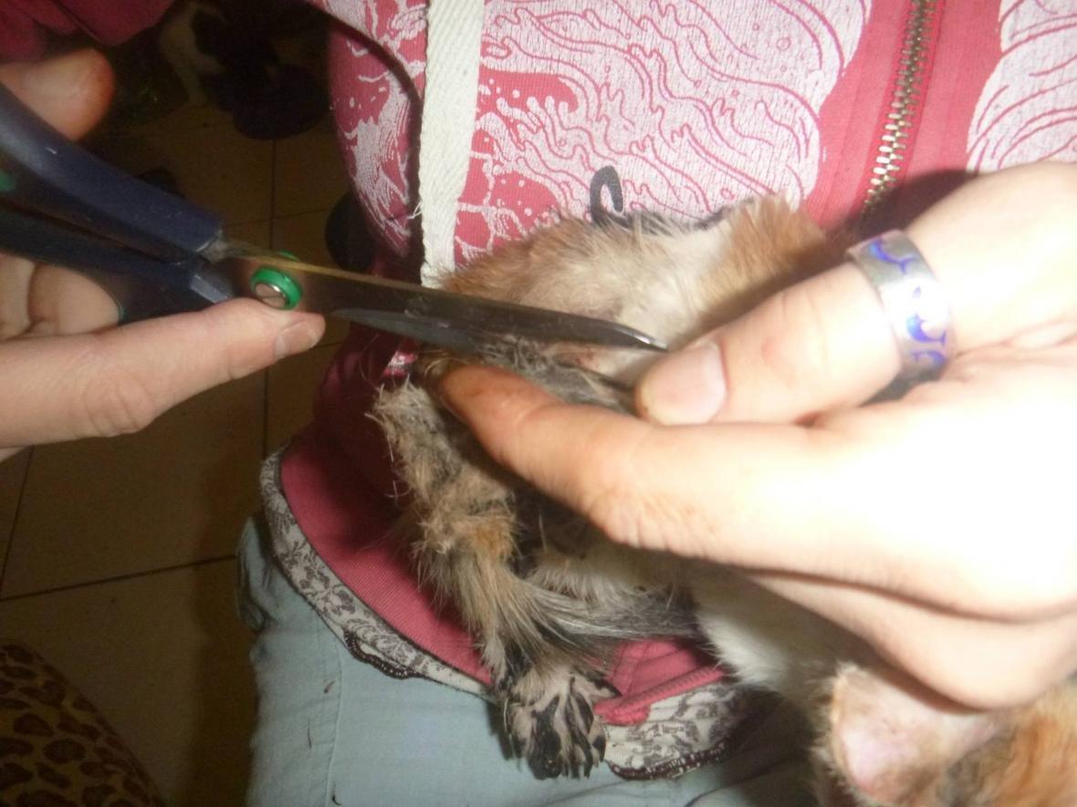 В Киеве спасли приклеенного битумом котенка (ФОТО), фото-5