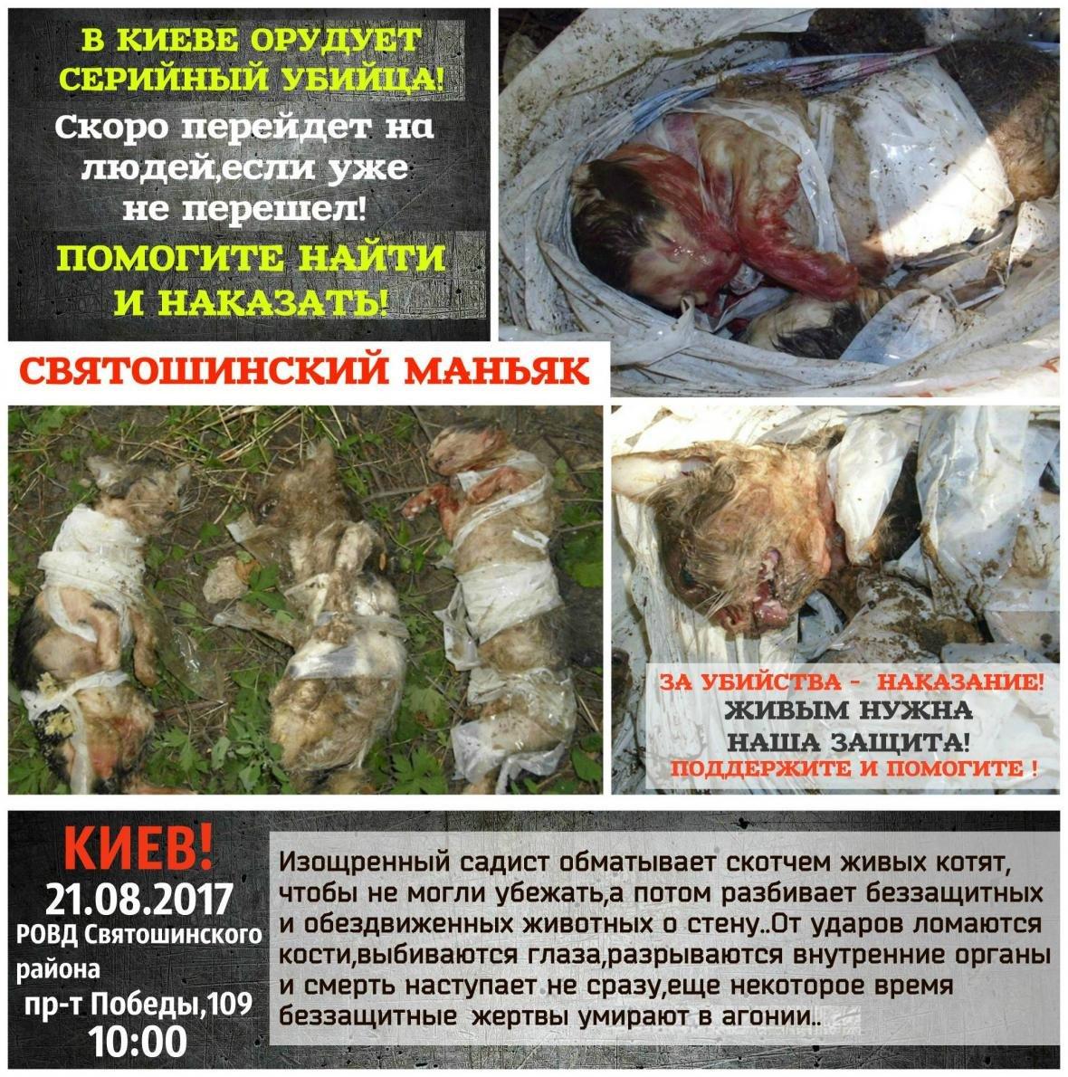 Человеческое зверство: в Киеве разыскивают убийцу трех котят, фото-1